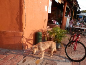 Street dog getting his treat