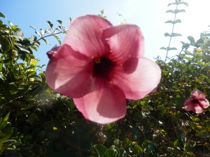 Beautiful Flower in the village Bbarre de Potosi