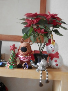 Our Christmas display