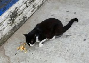 Street cat enjoying the Senors left-over chicken