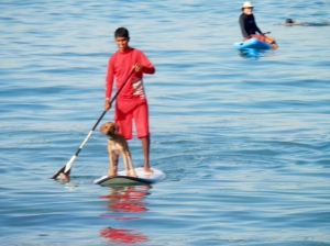 Paddle boarder with his dog