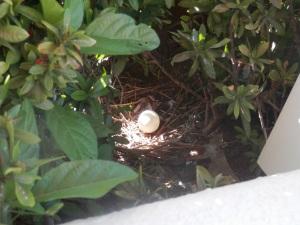 1 pidgin egg in nest