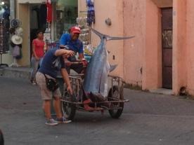 Big Tuna fish